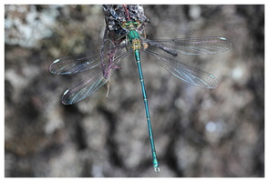 AGRION 2